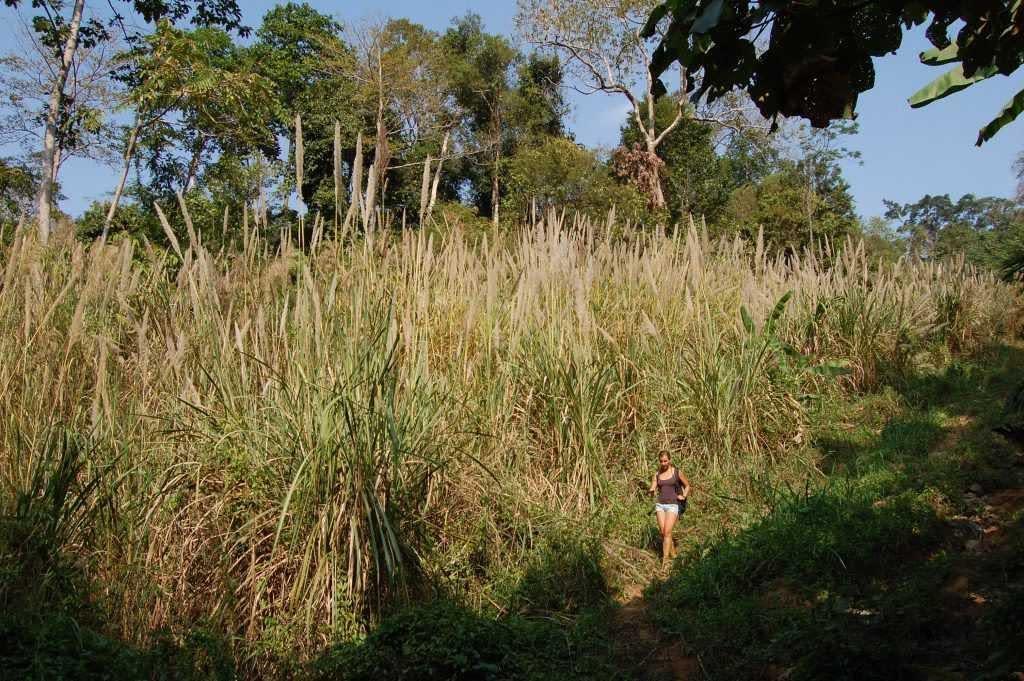 Cardamom Mountains Jungle Trek
