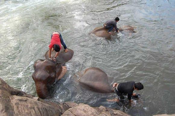 Three elephants Tad Lo Bolaven Plateau