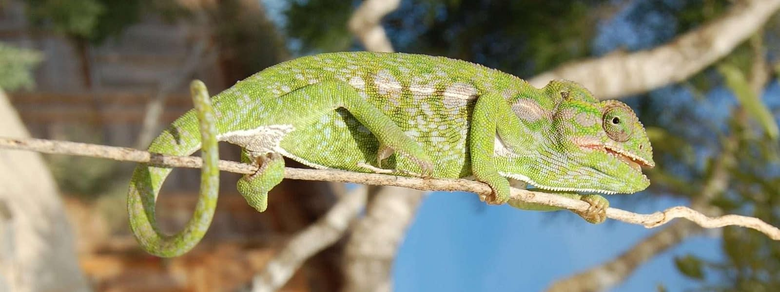 Anakao Madagascar