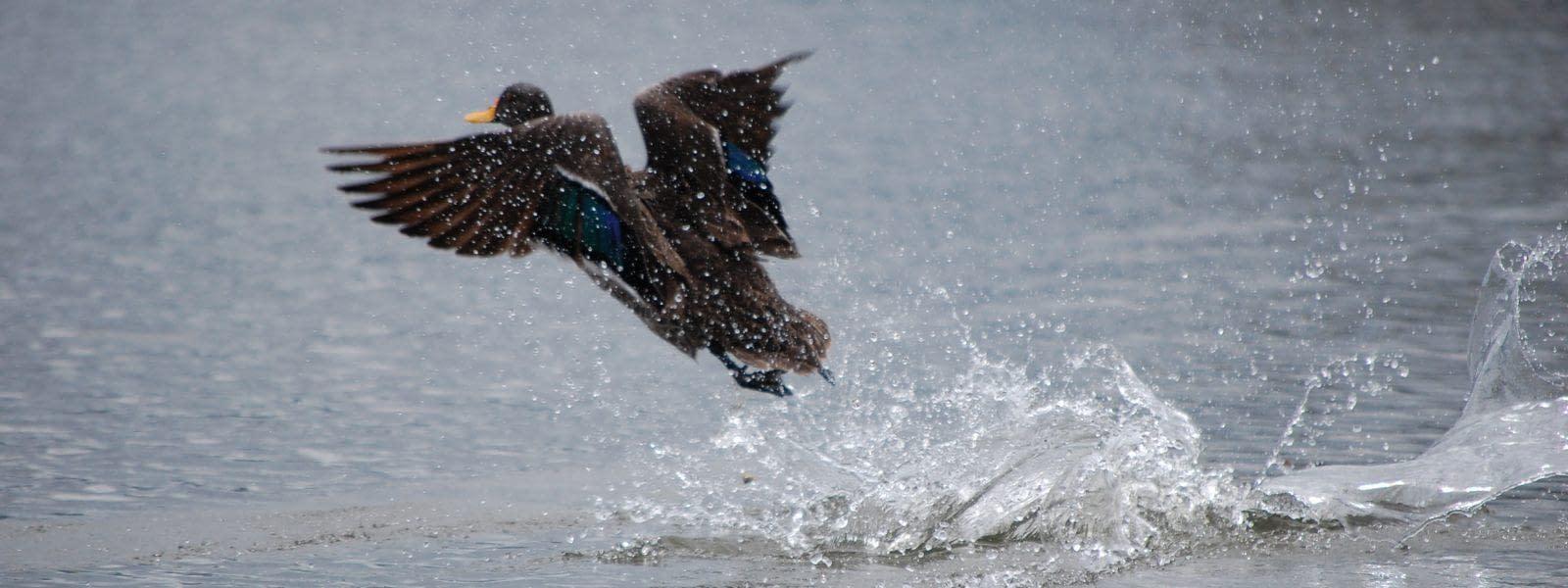 Lake Naivasha National Park Safari