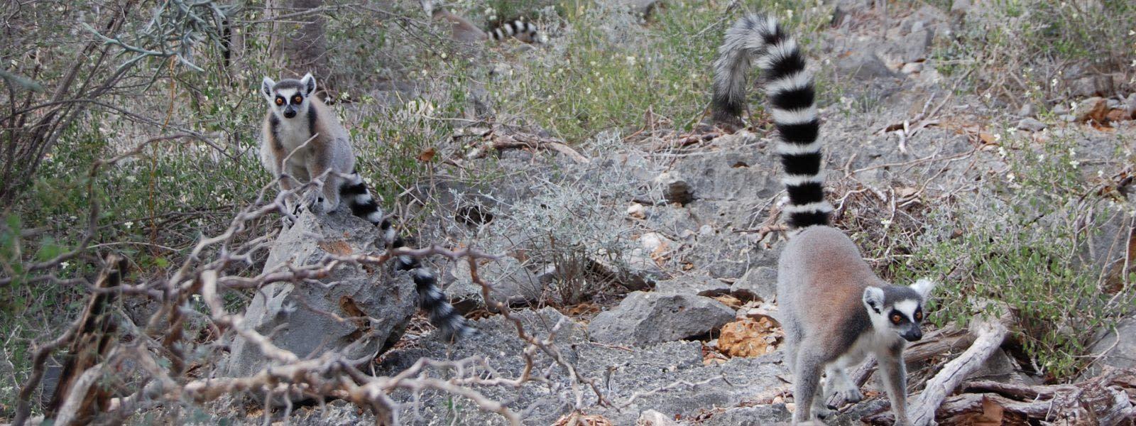 Tsimanampetsotsa Nature Reserve